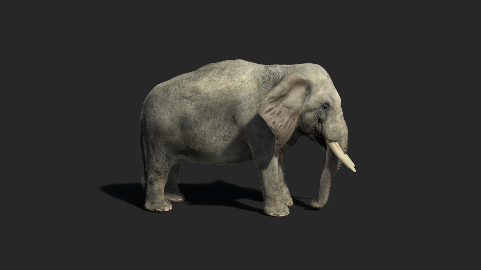 Elephant Render