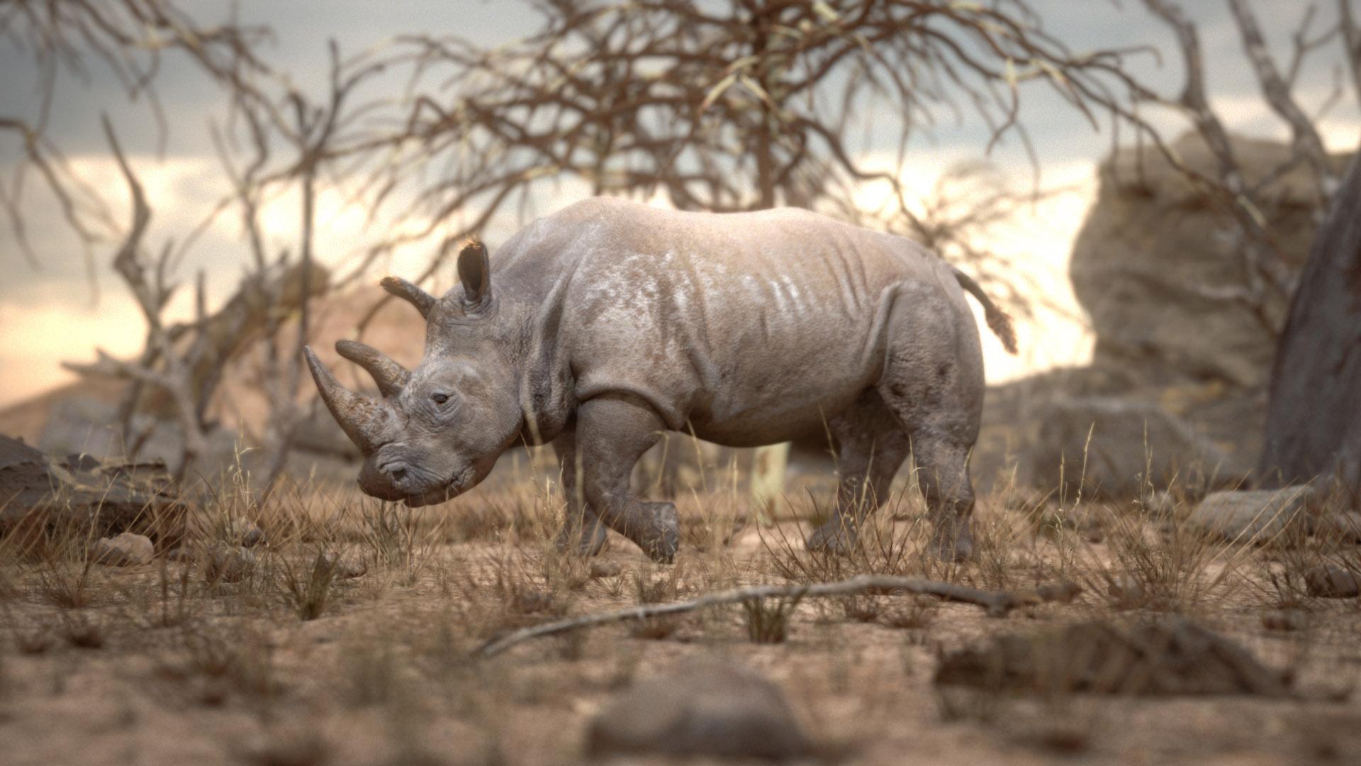 Rhino_Comp